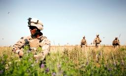 Afghanistan's Poppy Problem